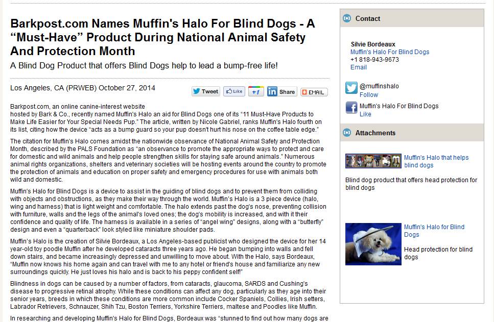 Second Chances For Blind Dogs